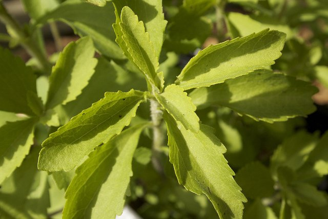 Stevia's Powerfully Sweet Benefits