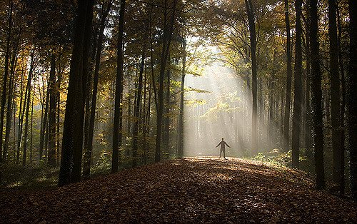 The Consequences of Stress Show Up in Your Teeth – Can  Forest Bathing Help?