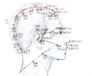 acupuncture diagram of head